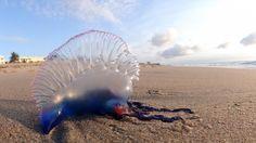 Strandwandelaars en zonaanbidders moeten de komende dagen in het uiterste…