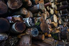 Wood tree stack.