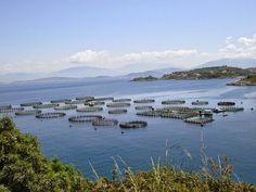 Fish farm bij Kassiopi, Corfu