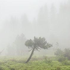 🌲Diese Stimmung wieder... . Nicht dass ihr denkt, ich sei ein Kind von Traurigkeit weil ich ständig diese Nebel- und Mieseswetterbilder poste. Ich liebe es, wenn bereits morgens früh die Sonne in unsere Küche scheint ☀️😃 Aber Wanderung bei trübem Wetter haben irgendwie eine reinigende Wirkung - finde ich 💫. ... und zudem passt grau besser in meinen Feed 😁 . . . . #moodoftheday #nebelwald #fog #foggy #nebel #woods #forest #mystic #trees #naturephotography #naturlovers #moody… Mood Of The Day, Country Roads, Mists, Mood, Weather, Sun, Woods, Grey