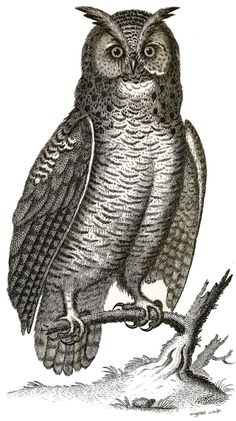 Vintage VIRGINIAN HORNED OWL Color Engraving on Totally Cotton Shirt. $17.00, via Etsy.