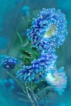 Morena fez-se a poesia Dolente tão quanto bela Uma e outra são pinturas Em cada estrofe uma tela Brilho de lua na noite -Jeito de flor primavera-