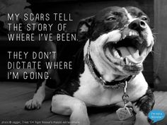 Scars --- People that fight dogs, should be thrown in the pit for the dogs to have their way with them!!!