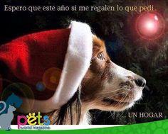 Espero este año si me regalen lo que pedí...  ...un hogar 🏡   #PetsWorldMagazine #RevistaDeMascotas #Panama #Mascotas #MascotasPanama #MascotasPty #PetsMagazine #MascotasAdorables #Perros #PerrosPty #PerrosPanama #Pets #PetsLovers #Dogs #DogLovers #DogOfTheDay #PicOfTheDay #Cute #SuperTiernos
