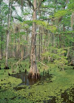 The Swamp Man - May/June 2012- Sierra Magazine - Sierra Club