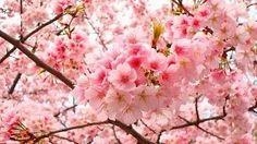Música Japonesa para Relajación y Meditación reiki Relax ZEN Japan - YouTube