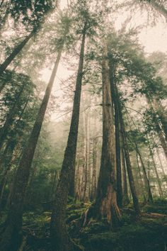 benchandcompass:  old growth.