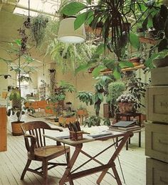 Messy plants, wood, natural light