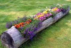 a flower bed in a log...clever!