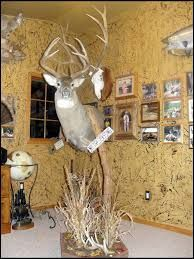 31 Best Stag Mounts Images Taxidermy Animals Deer Mounts