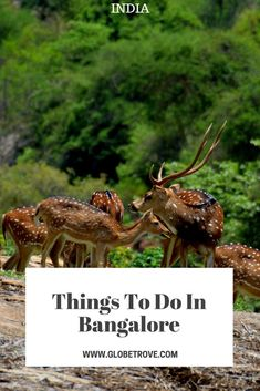 Bangalore has morphed from the garden city to huge bustling tech city. Despite the change if you look closely, you will find plenty of things to do in Bangalore and you can catch a glimpse of the city it once used to be.
