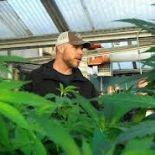 Montana Medical Marijuana Grower Sentenced Today | Marijuana.com
