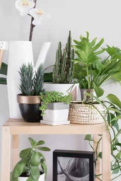 430 best decorating with plants my newest obsession images in 2019 rh pinterest com