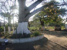Inmobiliaria MS Parcela 52 Ejido San José Novillero Mpio. Boca del Río, Ver. – TV 357 | Inmobiliaria MS