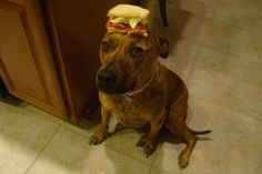 This is one of the best/funniest blogs I've ever seen! It's called Food on My Dog. This is the dog with a BLT on it. :)