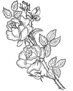 Rose Flower Coloring Pages Flower Coloring Pages, Coloring Book Pages, Embroidery Patterns, Hand Embroidery, Plant Drawing, Drawing Art, Digi Stamps, Pyrography, Colorful Pictures