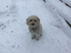 Molly loves the snow