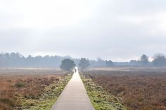 Veluwe Winter by Gwyneth Leermakers on 500px