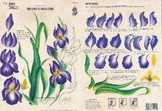 .iris