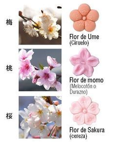 http://www.holanihon.com/tips-para-diferenciar-las-flores-japonesas/