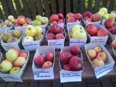 Apfelsorten in Franken