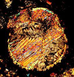 NWA 1930 meteorite thin section viewed through a polarizing microscope