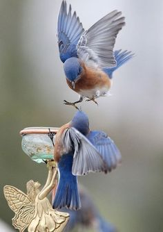 Fée with~Beautiful Birds~
