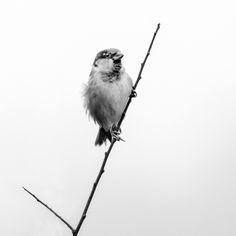 Nieuw in mijn Werk aan de Muur shop: Blowing in the wind