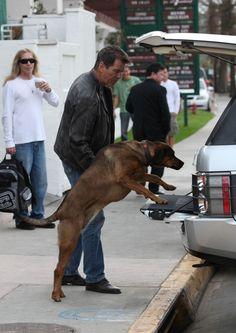 Celebrity Pets! Pierce Brosnan has his own doggie door for the car