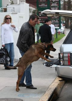 Celebrity Pets! Pierce Brosnan walks his dog with his son Dylan and a big smile in Malibu