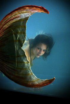 Little Mermaid Erg Mooie 02061