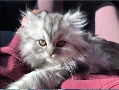 Cupid, Cute Cats, Pets, Animals, Cute Pets, Pretty Cats, Animales, Animaux, Animal