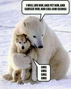 Polar Bear Hugs Wolf