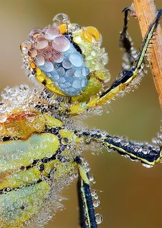 A dragonfly is covered in dew in this beautiful close-up by Martin Amm.