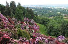 Il Parco della Burcina-Biella (Italia), con i suoi rododendri e le sue azalee