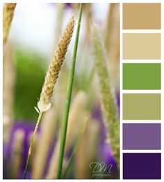 Love this color palette, now if I could only get motivated to paint & decorate...