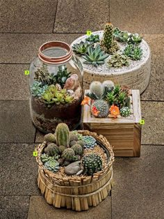 Luxury Small Cactus Ideas For Home Decoration. Here are the Small Cactus Ideas For Home Decoration. This post about Small Cactus Ideas For Home Decoration was posted Outdoor Cactus Garden, Mini Cactus Garden, Succulent Gardening, Succulent Terrarium, Container Gardening, Cactus Flower, Flower Bookey, Flower Film, Flower Pots