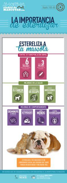 Esterilizar a perros y gatos evita la sobrepoblación canina y felina y mejora sus condiciones de salud en un gran porcentaje.
