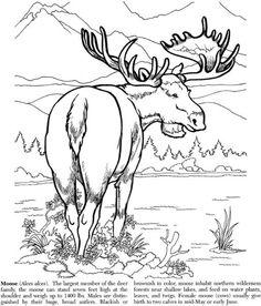 nature :: moose image by tharens - Photobucket