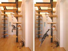 15 cantinhos criativos para o seu gato se sentir em casa - limaonagua                                                                                                                                                     Mais