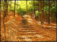 Glen Rouge Park - Toronto, Ontario  #CDNGetaway