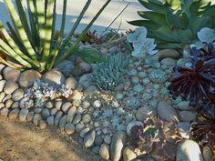 Front yard succulent plantings,