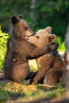 Like puppies, bunnies, babies, and so on. A place for really cute pictures and videos! Grizzly Bear Cub, Bear Cubs, Cute Baby Animals, Animals And Pets, Funny Animals, Wild Animals Pictures, Cute Animal Pictures, Animal Magic, My Animal