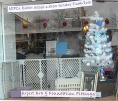 MSPCA Rabbit Adopt-a-thon we hosted in December 2011