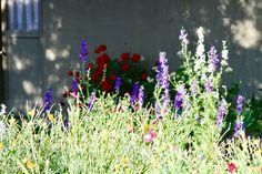 Wild flowers in Davis, California