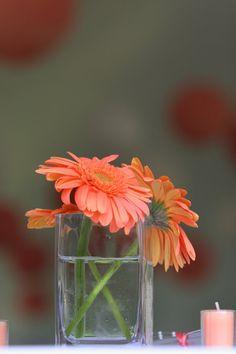 #Gerbera Daisies @CarolLynnsEvents #Flowers by Carol Lynn Originals & Events