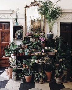 there is something about this beautiful array of plants - Vicki Archer // https://www.instagram.com/vickiarcher/