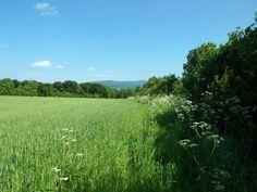 Vineyard, Plants, Outdoor, Outdoors, Flora, Plant, Outdoor Games, Outdoor Living, Planting