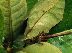 Lézards, poissons, crapauds : les as du camouflage - Le Nouvel Observateur