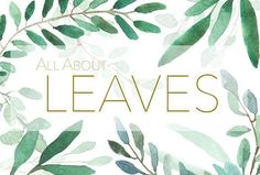 All About Leaves  by MariePierLaf on @creativemarket